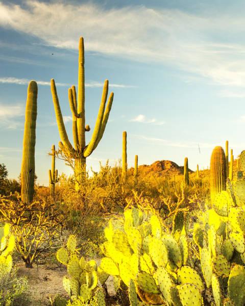 Photograph - Desert View by Matt Cohen
