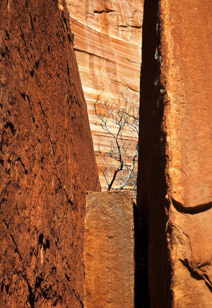 Sedona Arizona Wall Art - Photograph - Desert Vise by Mike  Dawson