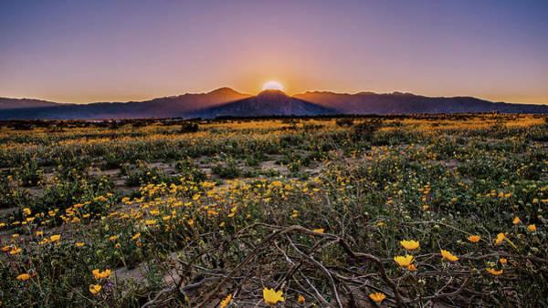 Desert Flower Photograph - Desert Vitality by Ryan Weddle