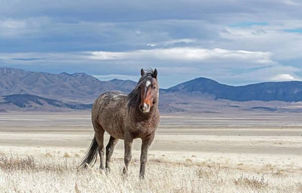 Photograph - Desert Wild Horse by Scott Read