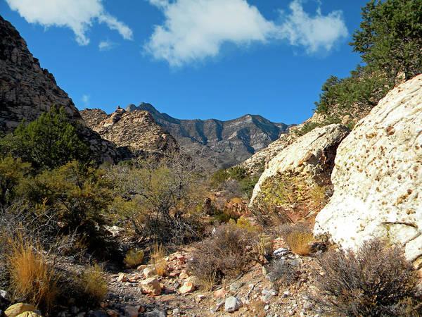 Photograph - Desert Wilderness by Frank Wilson