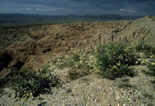 Photograph - Desert Wildflowers And Badlands by Don Kreuter