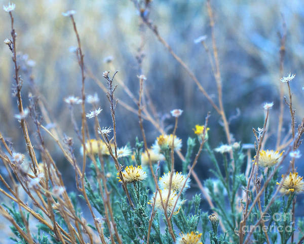 Photograph - Desert Wildflowers by Susan Warren