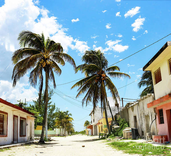 Photograph - Deserted Mexican Village Road With Coconut by Susan Vineyard
