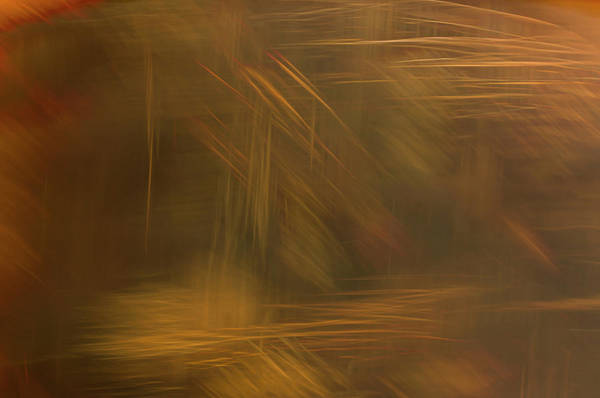 Photograph - Desert's Breath by Deborah Hughes