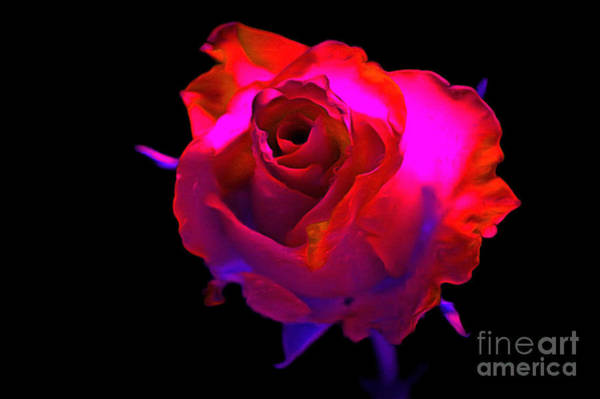 Red Roses Photograph - Desire by Krissy Katsimbras
