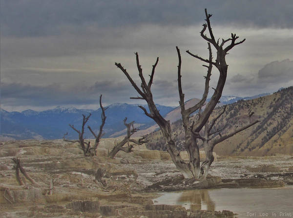 Photograph - Desolate Beauty by Teri Ridlon