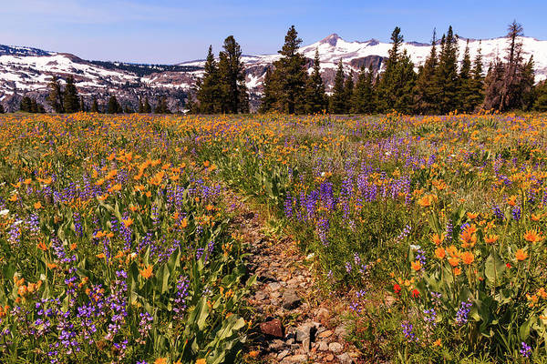 Lightroom Photograph - Desolation Path Of Wildflowers by Mike Herron