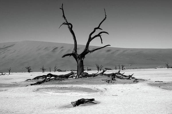 Photograph - Namib Naukluft National Park  by Aidan Moran