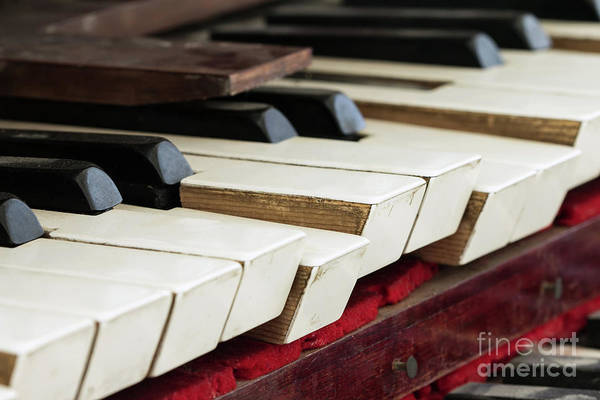 Old Wall Art - Photograph - Detail Of Old, Broken And Dusty Organ Keys by Michal Boubin