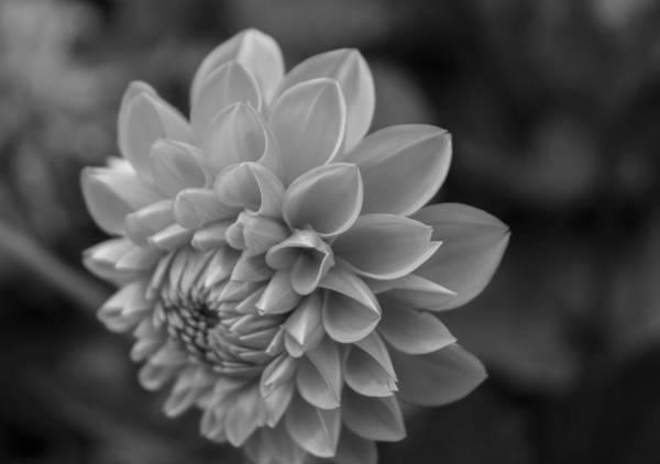 Photograph - Detailed by Arlene Carmel