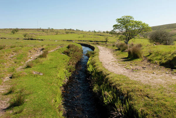 Devonport Wall Art - Photograph - Devonport Leat, Dartmoor by Helen Northcott