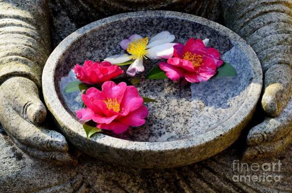 Japonica Photograph - Devotional by Dean Harte