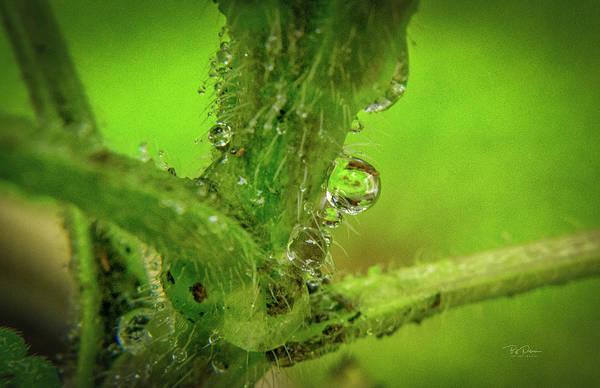 Photograph - Dew Drop Closeup by Bill Posner