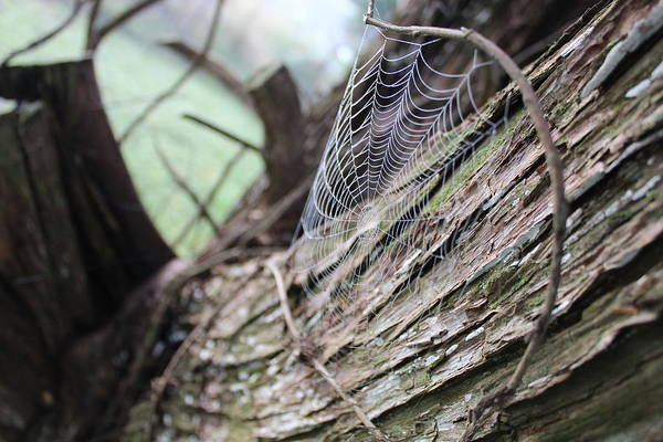 Wall Art - Photograph - Dew Drop Web by Weathered Wood