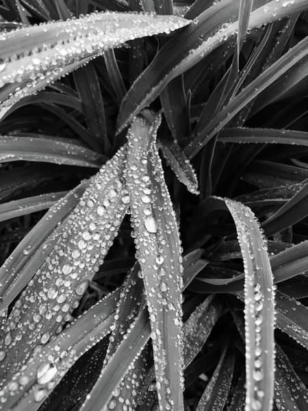 Photograph - Dew Drops Await The Sun by Lora Lee Chapman