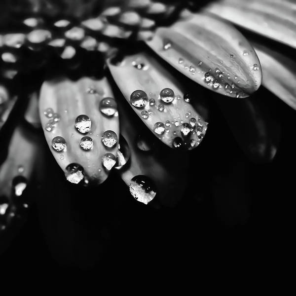 Photograph - Dew Drops by David Patterson