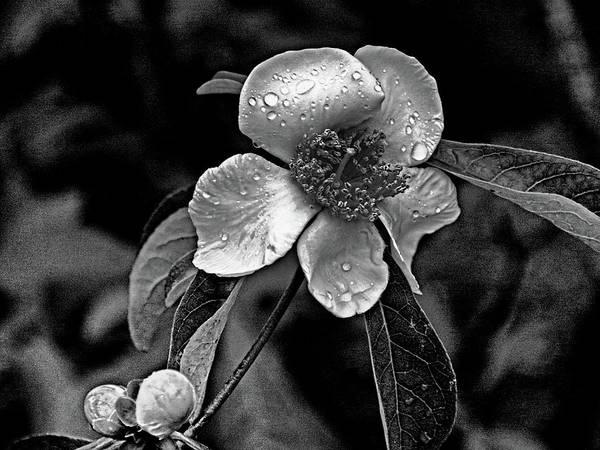 Photograph - Dew On Flower by Bill Jonscher