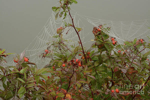 Photograph - Dew On Webs by Charles Owens