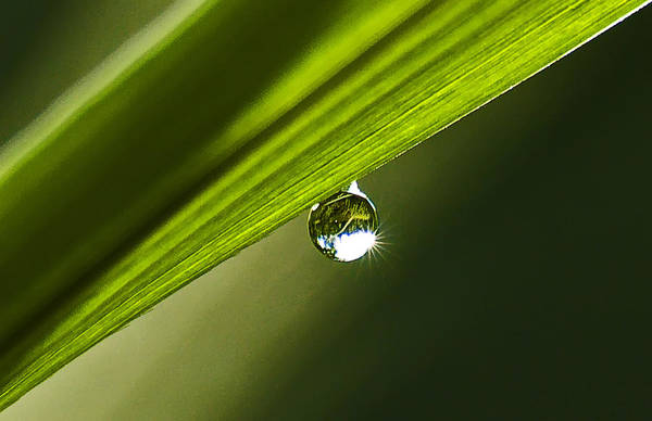 Dewdrop On A Blade Of Grass Art Print by Michael Whitaker