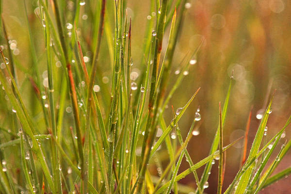 Photograph - Dewdrops In The Morning by Leda Robertson