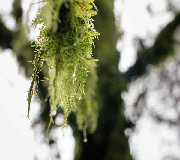 Photograph - Dewy Moss by Trance Blackman