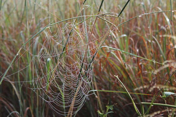 Wall Art - Photograph - Dewy Web by Weathered Wood