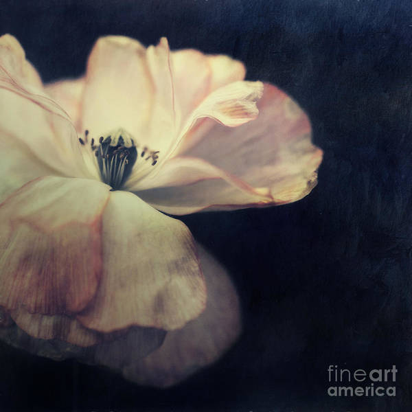 Flower Head Photograph - Light In The Dark by Priska Wettstein