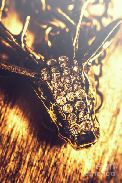 Rich Photograph - Diamond Encrusted Wildlife Bracelet by Jorgo Photography - Wall Art Gallery