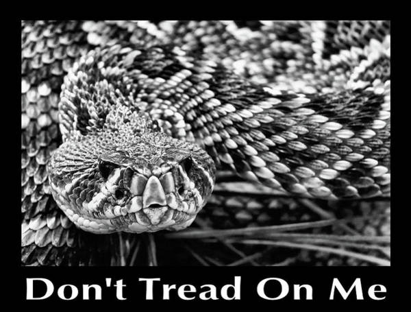 Wall Art - Photograph - Diamondback Don't Tread On Me by JC Findley