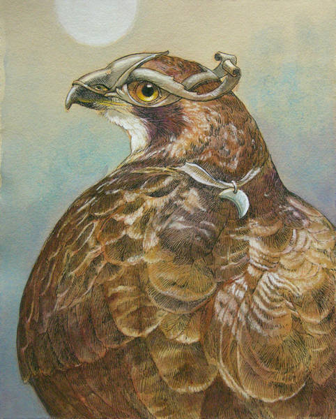 Hawk Painting - Diana by Tracie Thompson