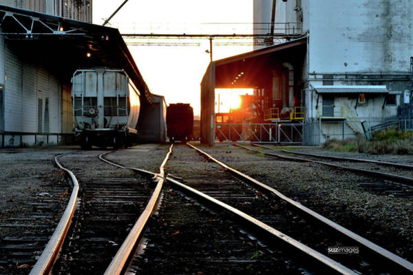 Photograph - Different Tracks by Susie Loechler