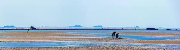 Photograph - Digging In The Mudflat by Sun Travels