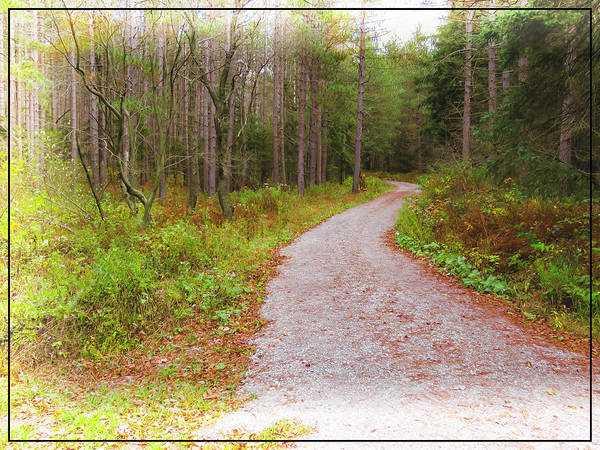 Photograph -  Digital Art Photograph Of A Dirt Road Winding Through A Pine Fo by Rusty R Smith