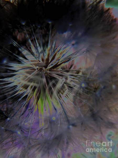Digital Art - Digital Dandelion by D Hackett