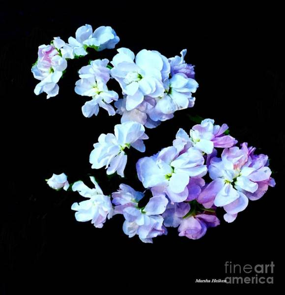 Wall Art - Digital Art - Digital Floating Flowers by Marsha Heiken