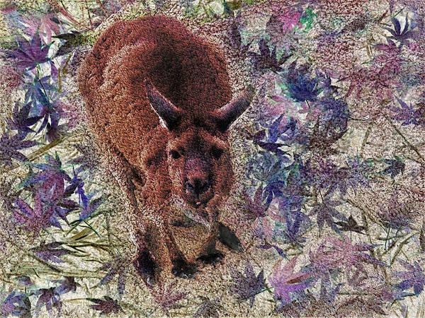 Kangaroo Drawing - Digital Skippy by Yolanda Caporn