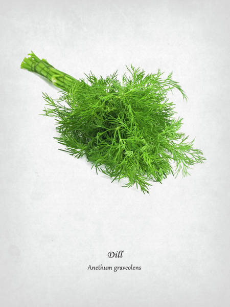 Wall Art - Photograph - Dill by Mark Rogan