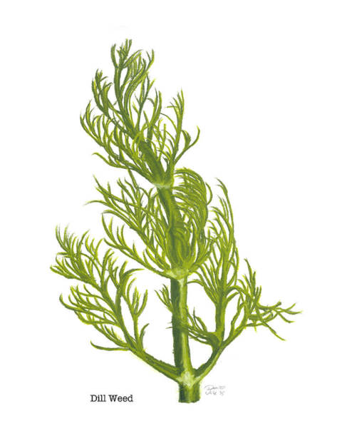 Drawing - Dill Plant by Dominic White