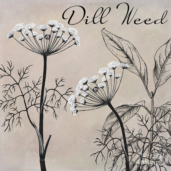 Weeds Painting - Dill Weed Flowering Herb by Mindy Sommers