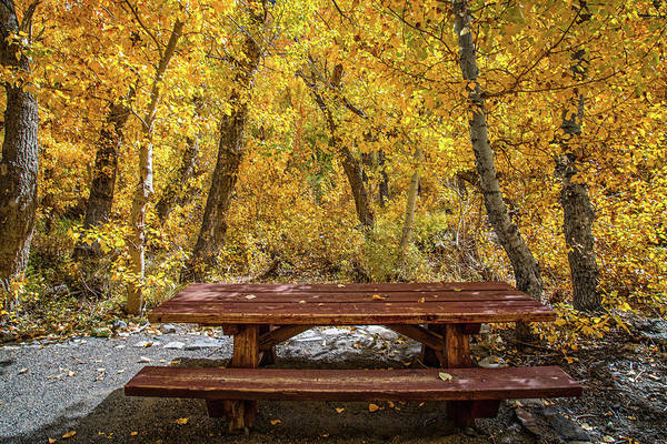 Photograph - Dining In A Golden Forest by Lynn Bauer