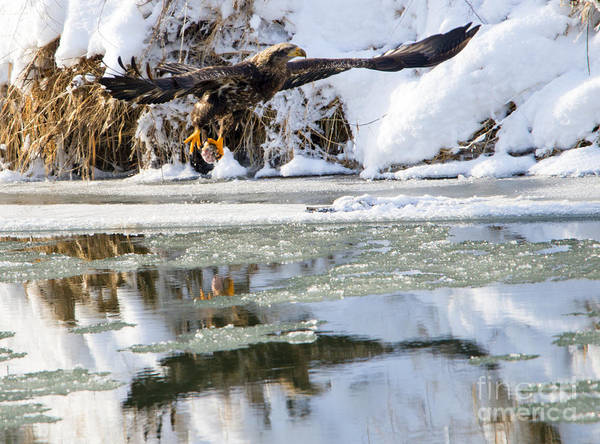 Wall Art - Photograph - Dinner On Ice by Mike Dawson