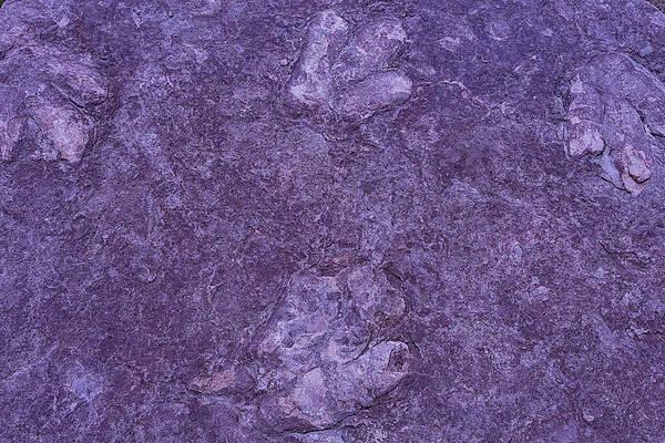 Petrified Photograph - Dinosaur Tracks by Garry Gay