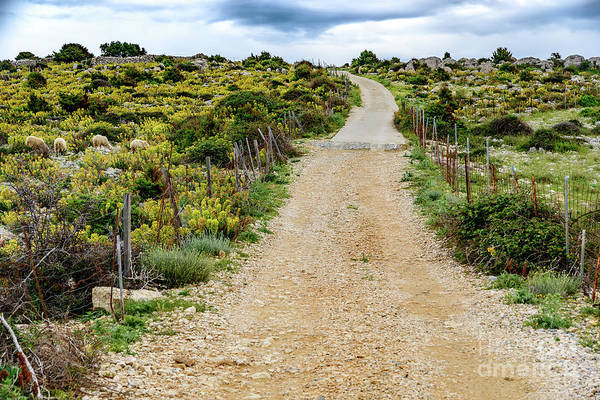 Photograph - Dirt Road In Rab by Global Light Photography - Nicole Leffer