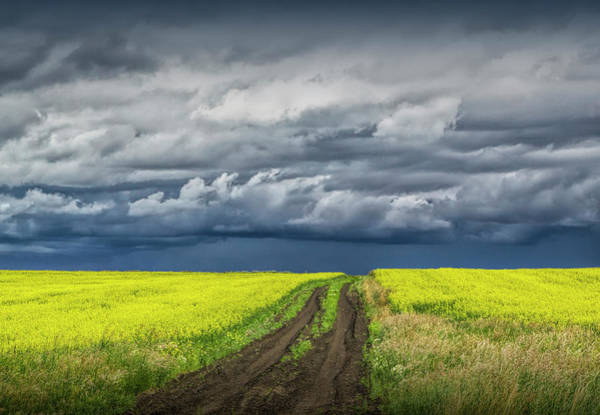 Photograph - Dirt Road Through A Canola Seed Field In Southern Alberta Canada by Randall Nyhof