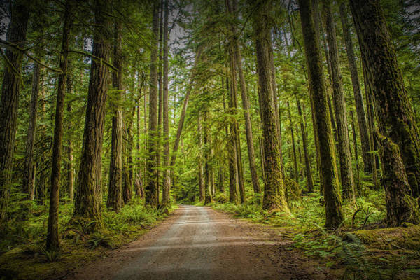 Photograph - Dirt Road Through A Rain Forest On Vancouver Island by Randall Nyhof