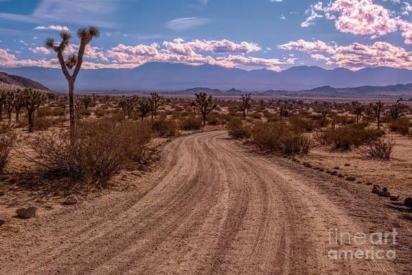 Photograph - Dirt Road Throught The Desert by Joe Lach