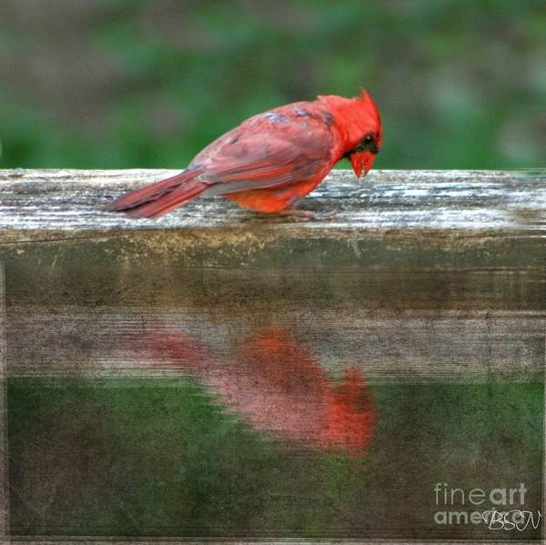 Photograph - Cardinal Reflects In Dirty Water by Barbara S Nickerson