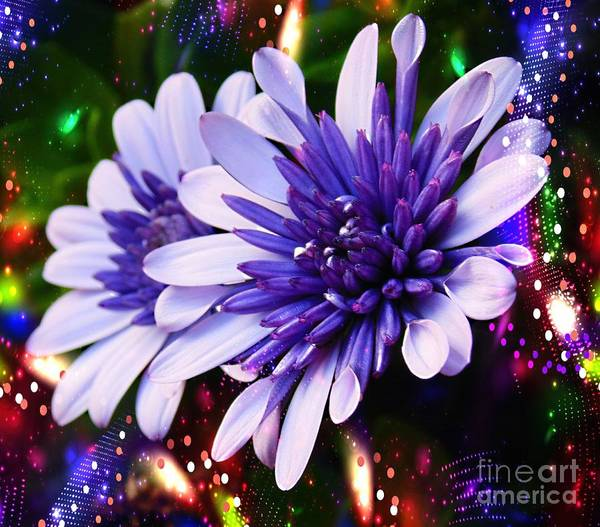 Single Leaf Mixed Media - Disco Daisies. by Trudee Hunter