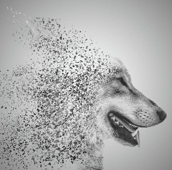White Wolf Photograph - Disintegrated Wolf by Martin Newman